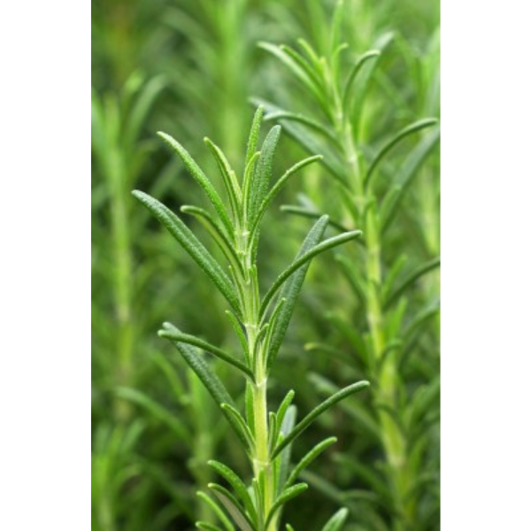 KHA-998 Khadi - Olio Anticaduta Vitality Grow